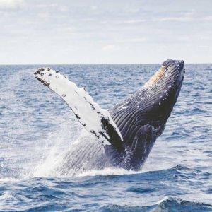 avvistare le balene a hermanus