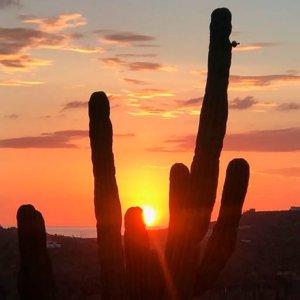 Cactus nel deserto della Baja California