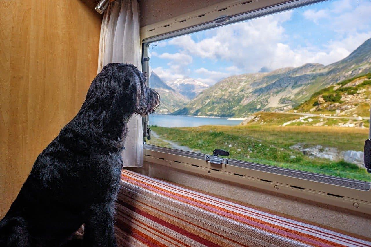 cane-treno