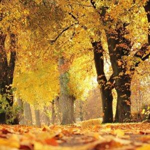 fenomeno-foliage