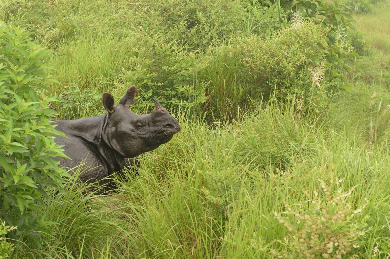 parco-Chitwan